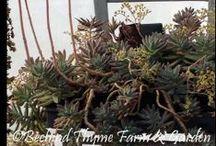 Succulent & Sedum LOVE...