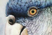Watercolor - Birds
