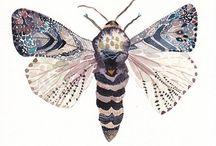 Watercolor - Bugs