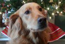 Fur-Kids / rescue dogs,  golden retriever, sheltie, dogs rock / by Ann Jackson
