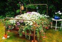 garden / by Christie Doucette