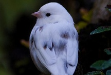 BIRDS / by Cindy Hunter