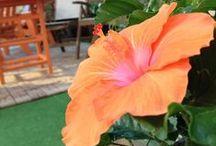 Flora and Fauna  / by Living MacTavish