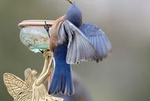Aviary... / by Debi Griffin