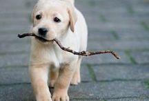 Too Cute! / by Sydney Branson