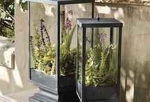 Garden - Indoor / Terrarium