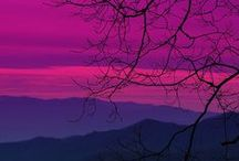 purple / by J Indigo