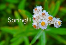 Spring!!!!!! / by Kristi @ Creative Connections for Kids