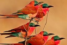 photo - birds