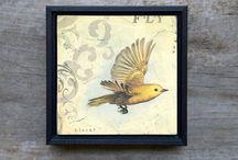 birds / birds in flight, beautiful birds, bird art inspiration