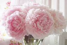Fleur / Les fleurs et leur poésie naturelle
