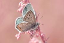 papillons et libellules