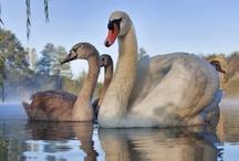 Birds / by Janet Gregg-Fortenberry