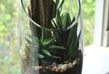For the Home {Garden} / Terrariums and plant life.