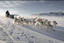 極北の大地を犬ぞりで駆ける / グリーンランド / デンマーク
