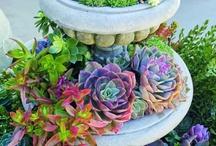 Garden / by Lori Bruce Dickson