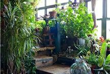 Gardens, Porches, Tree Houses and Plants