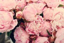 Flower prettiness