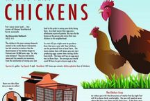 Country Chic / All things poultry: chicks, hens, roosters, coops, decor, info, flock FYIs