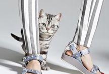Stylish. Cats. / Gloriously stylish cats photographed in inspirational fashion forward styling. LOVE IT! / by Lindsey Lang Design Ltd.