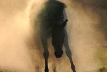 BULLS OR HORSES / by Henry Henss