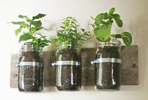 Grow garden, grow! / by Sarah Packard