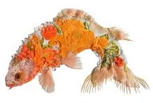 Fish / All things that live under the sea.