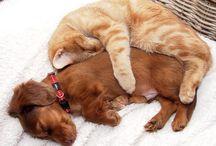 Pets {Lovebeingaveterinarian} / by Bridgette Cochran