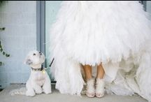 Frills & Thrills >inspire me / Wedding and event theme inspiration, to push the boundaries of imagination.