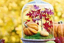 Herbst / Deko, Rezepte, DIY-Projekte für den Herbst