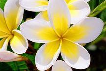 Fiori -Flowers- Flores