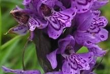 Passionate for Purple