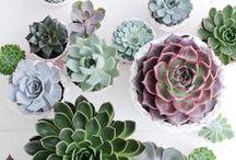 Floral & Botanical / by Lena Alvarez