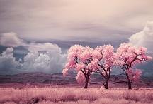 Pink / by Lena Alvarez