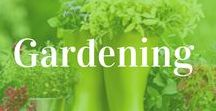In The Garden / Gardening tips for your backyard vegetable garden, herb and floral gardens and DIY landscaping ideas.