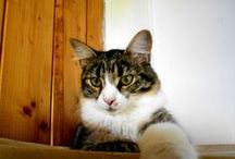Migdalina / My cat Migdalina