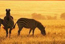 Sudáfrica / Este tablero incluye fotografías de lugares bellos para ir en Sudáfrica. Si desea visitar Sudafrica y aprender inglés visitanos en: www.intercoined.net