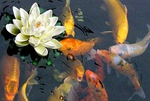 koi/pond & water features  / by Gina Cuccinello