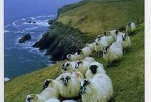 Irlanda / Este tablero incluye fotografías de lugares bellos para ir en Irlanda. Si desea visitar Irlanda y aprender Irlandes visitanos en: www.intercoined.net