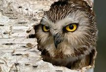 Beonka's Owls / by Kathy