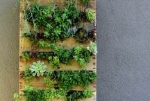 urbanjungle / Grüne Projekte, Dekoieren mit Blumen und besonders Grünpflanzen // urbanjungle