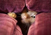 Cats in Stealth Mode / Cats are experts at hiding.
