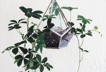 succulents & other plants