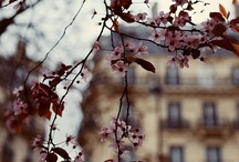 springtime in the city / by Kimberly Morris
