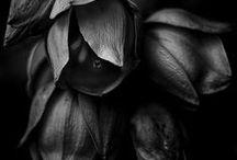 BLACK  BOARD / by Missy Rose