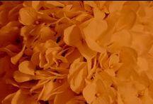 Orange Weddings / Orange wedding ideas. Pumpkin orange, bright orange, tangerine, carrot orange colors, etc. From floral and reception, to bridesmaid dresses and wedding invitations!