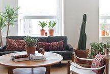 Pots + plants