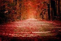 """my fall"""