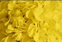 Yellow Wedding / Yellow wedding ideas. Bright yellow, sunflower yellow, golden yellow, lemon yellow, banana yellow colors, etc. From floral and reception, to bridesmaid dresses and wedding invitations!