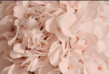 Blush Weddings / Blush wedding ideas. From floral and reception, to bridesmaid dresses and wedding invitations!
